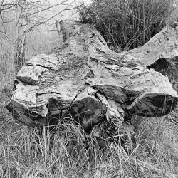 Toter Baum im Kreuzlinger Stadtgarten
