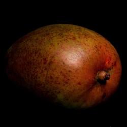 Stillleben Mango