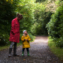 Ben Bulben Forest Trail